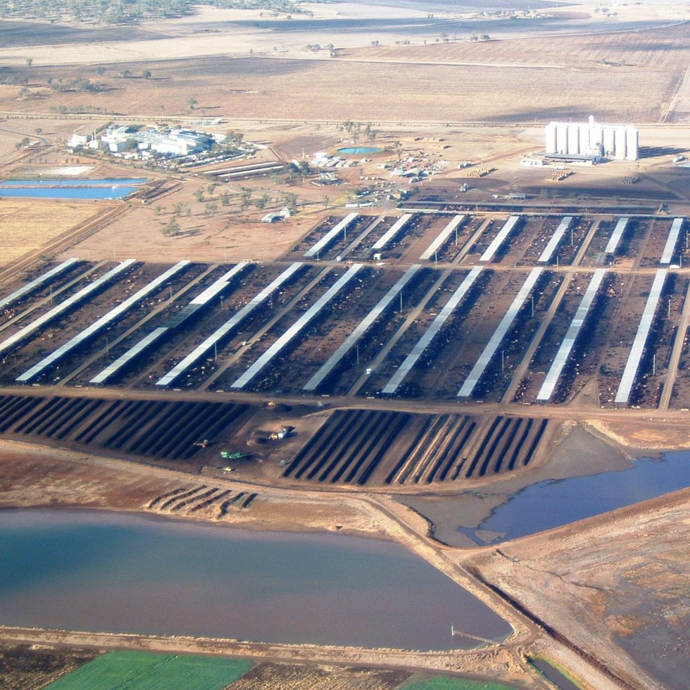 Pen shade, manure composting areas and effluent ponds are clearly evident in this aerial view of the feedlot