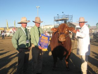 Martin Pentecost, Landmark Rockhampton branch manager and Richard Norton, Landmark general manager, congratulate Jason Childs, Glenlands Droughtmaster, Bouldercombe on winning the Beef 2012 interbreed championship with Glenlands Prince.