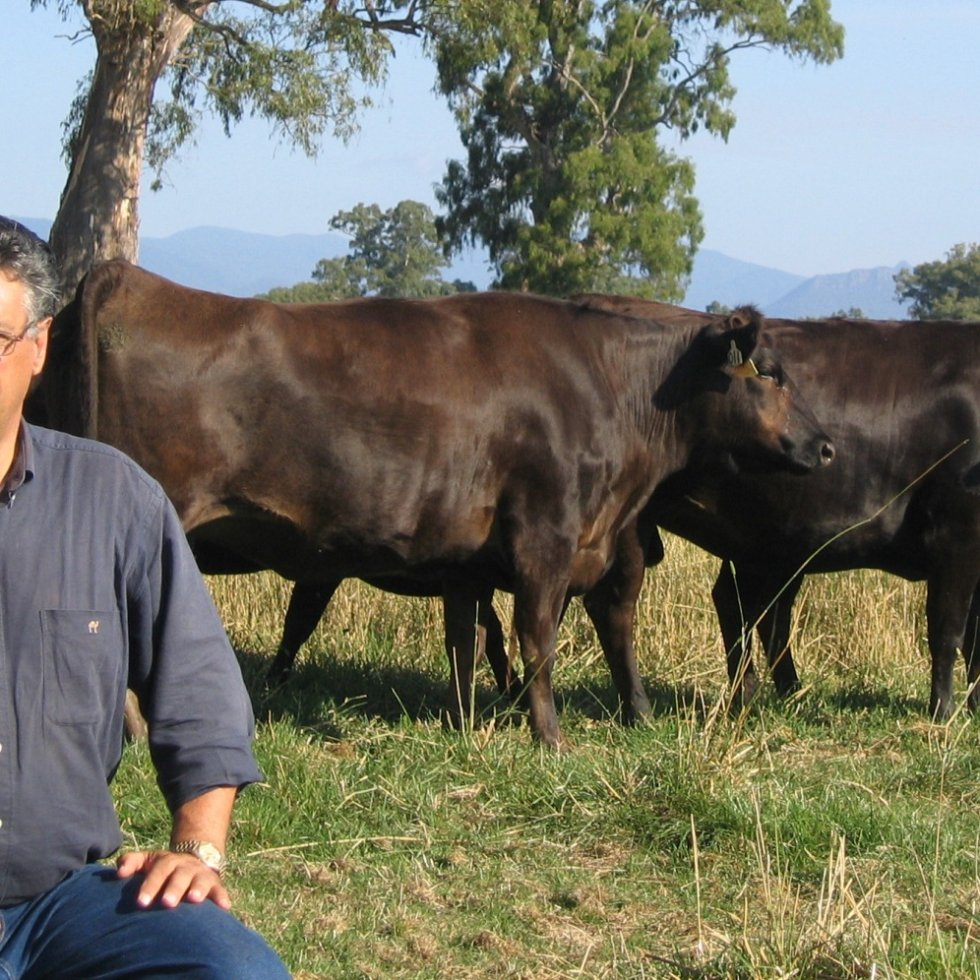 David Blackmore with Fullblood Wagyu on his Alexandra (Vic) property