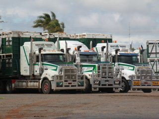 Robertson's Transport trucks at the company's Drayton depot.