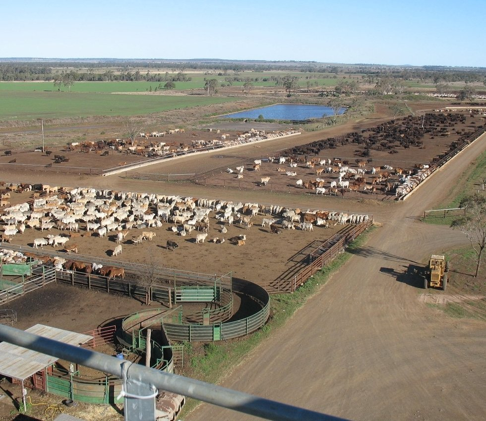 Wonga Plains feeding pens, viewed from the grain storage/processing facility
