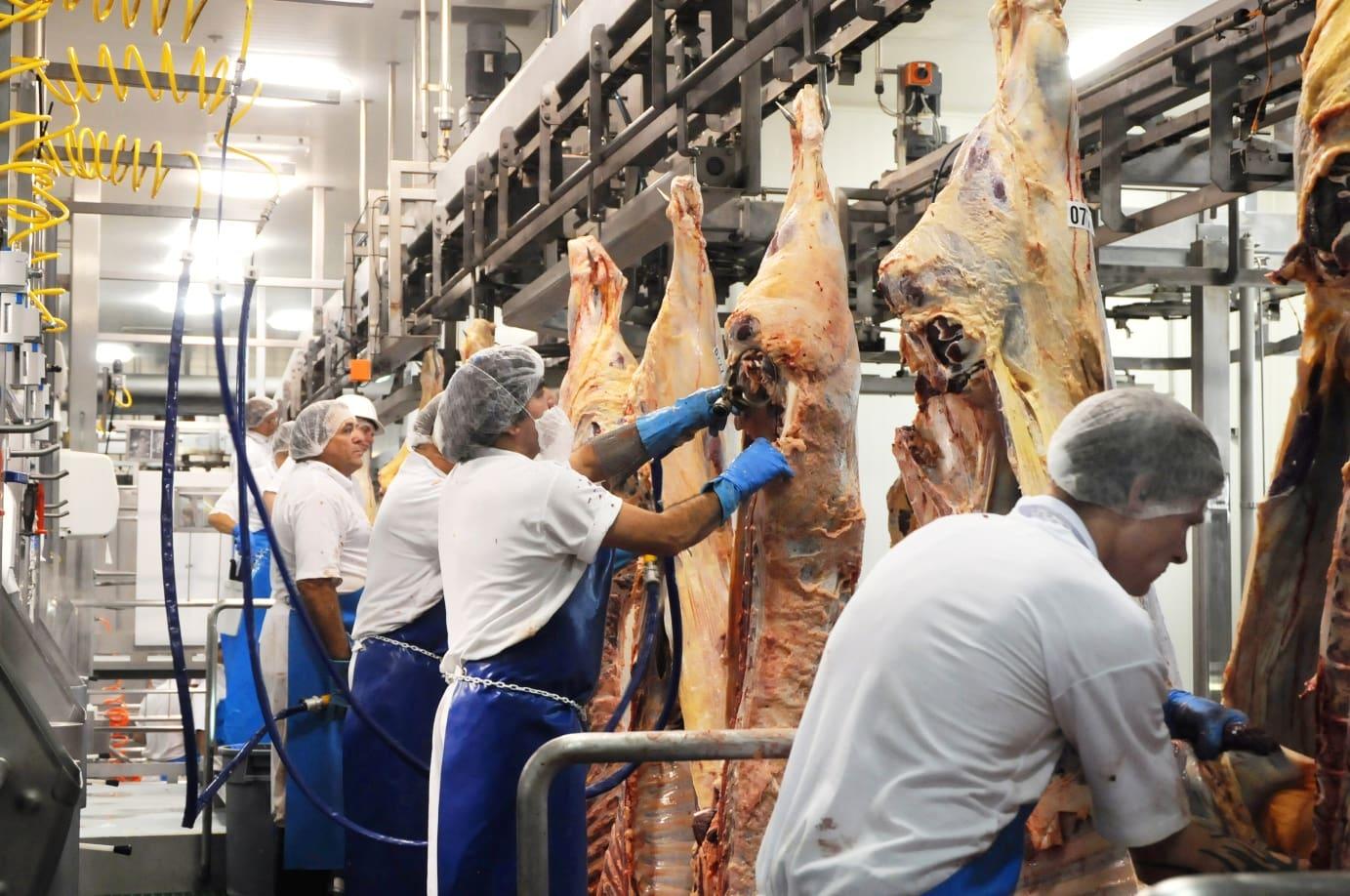 Abattoir Kill Floor Processing