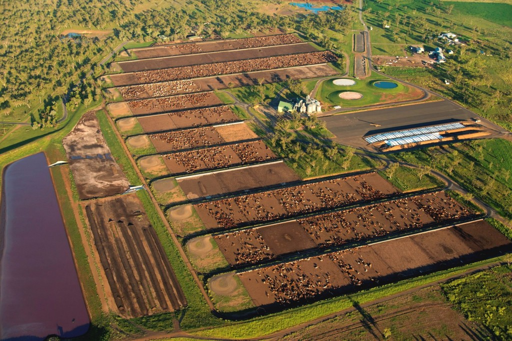 Weekly Property Review Feedlots Contribute To Interest In