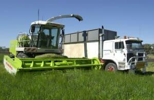 Forage silage harvest