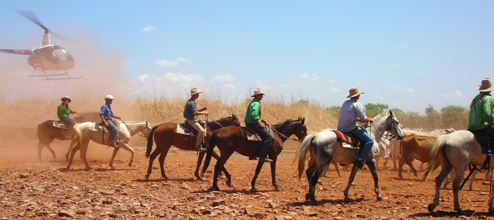 northern cattle muster recruitment