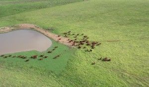 southern beef generic environment cattle water Moree