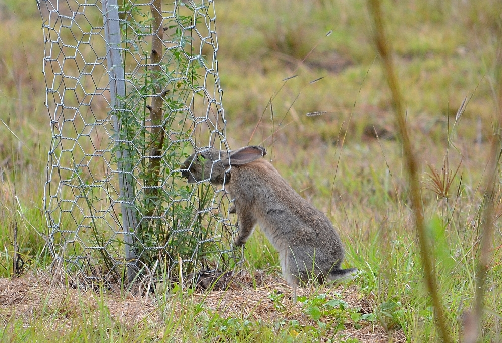 Research Collaboration Tackling Feral Animal Problems