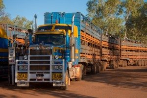 he new TRANSIT tool developed by CSIRO is identifying ways to cut the costs of transporting cattle—offering solutions that would reduce the vast distances travelled and the numbers of trucks on the road. The tool will be applied beyond the livestock industry for use more broadly in the agricultural and logistics sectors. Image: Frans de Wit/Flickr CC BY-NC-ND (http://ow.ly/MmyIH ) https://blogs.csiro.au/ecos/modelling-a-more-efficient-future-for-cattle-transport/