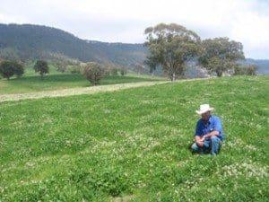 Improved pastures on 30,000ha Glenrock Station, east of Scone