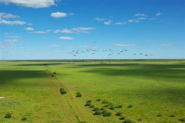Paraway-Pastoral-Co-Walhallow-Aerial