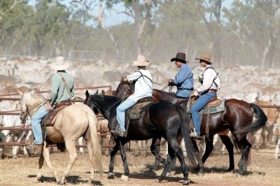 generic cattle northern staff labour recruitment