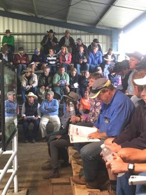 Part of the large crowd around the sale ring at Spry's Shorthorn and Angus bull sale on Friday