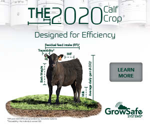 https://growsafe.com/our-solutions/seedstock/?utm_source=beefcentral&utm_medium=mrecgeneticscentralbanner&utm_campaign=cropcalf&utm_term=300x250&utm_content=cropcalf